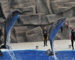 bottlenose-dolphins-at-batumi-dolphinarium-photo-courtesy-of